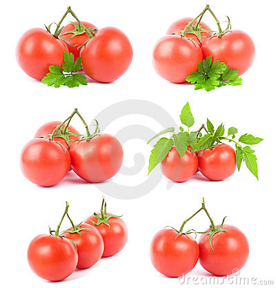 Set tomato fruits