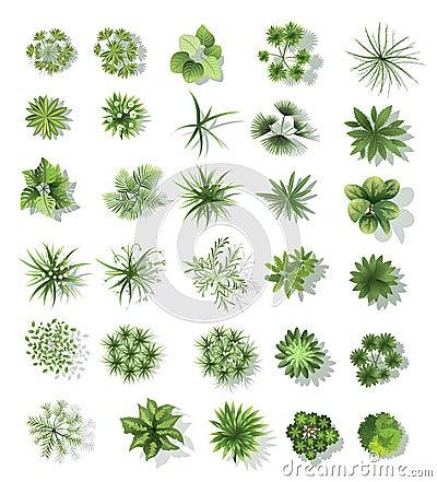 Set Of Treetop Symbols For Architectural Or Landscape Design Vector