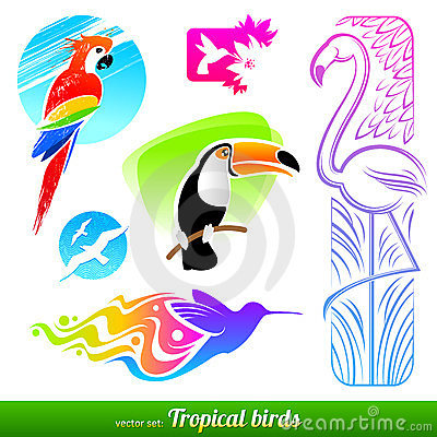 Set of tropical birds