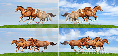 Set - various galloping herd of horses in field