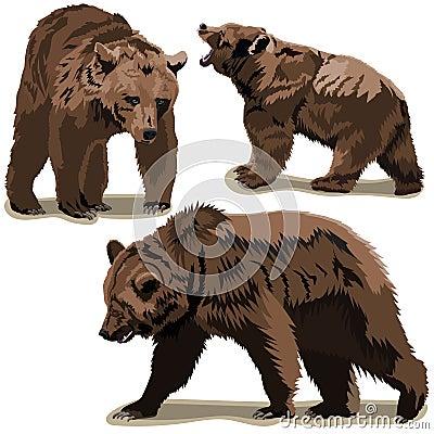 Set of brown bears Vector Illustration