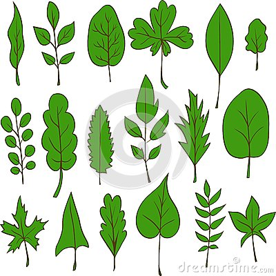 Set of vector leaves
