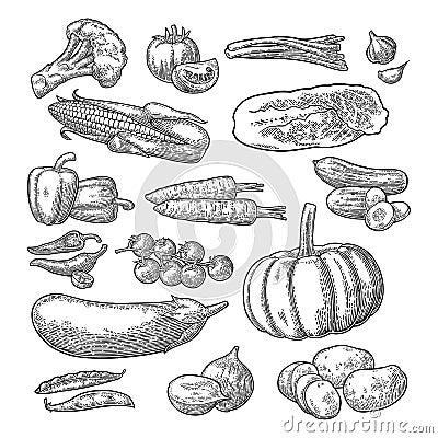 Free Set Vegetables. Cucumbers, Garlic, Corn, Pepper, Broccoli, Potato And Tomato. Stock Photography - 102301492