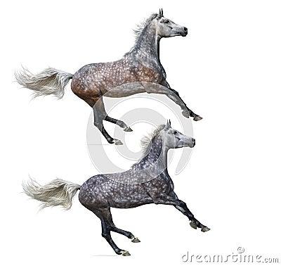 Set - verschiedene Farbe zwei von galoppierenden Pferden