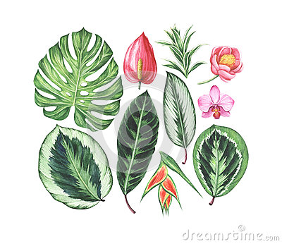 Set of watercolor tropical flowers and leaves. Cartoon Illustration