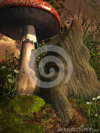 Seta por un árbol viejo