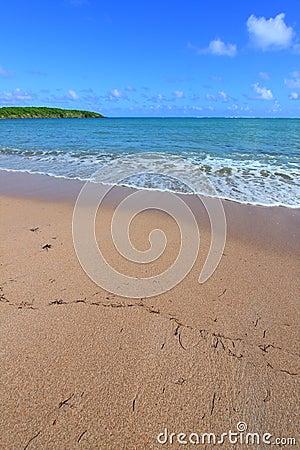 Sete mares encalham - Puerto Rico