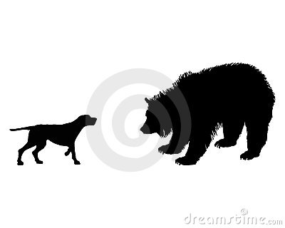 Setter and grizzly bear meet