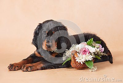 Setter s puppy with flowers