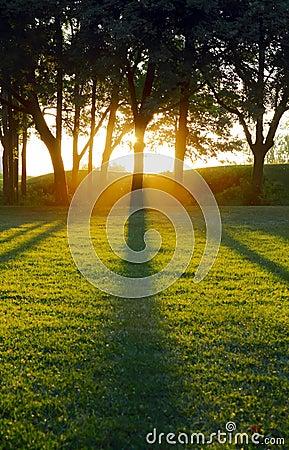 Setting sun casting tree shadows
