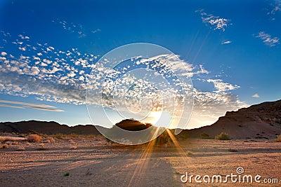 Setting sun tree in desert