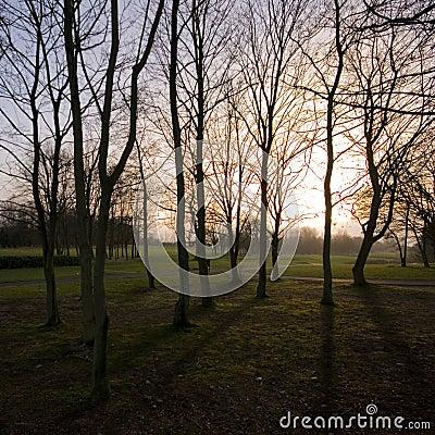 Setting sun through winter trees