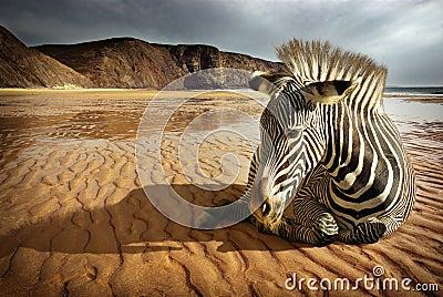 Setzen Sie Zebra auf den Strand