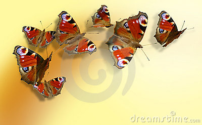 Seven colorful butterflies on yellow-orange background