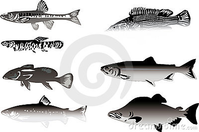 Seven grey fishes isolated on white