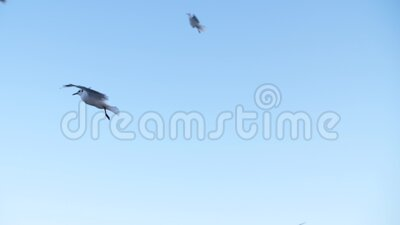 Seagulls fly in slow mo. Several gulls fly in slow mo against a blue sky stock video footage
