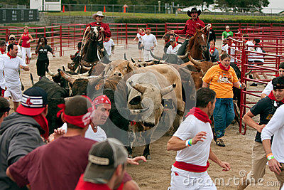 Several People Run With The Bulls At Georgia Event Editorial Stock Photo