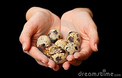 Several quail eggs