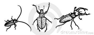 Several species of beetles