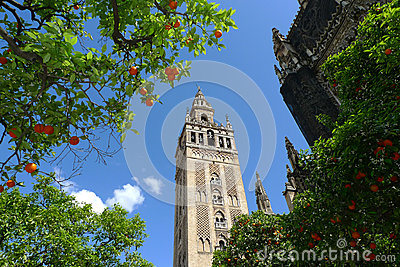 Seville Cathedral and oranges, Spain