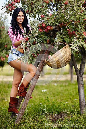 Sexy brunette picking apples
