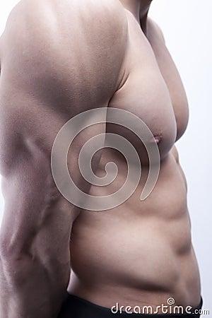 Sexy male s body (torso)