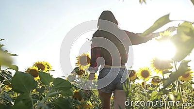 young woman running through sunflower field stock video