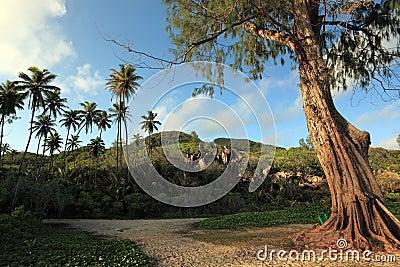 Seychelles landscape.