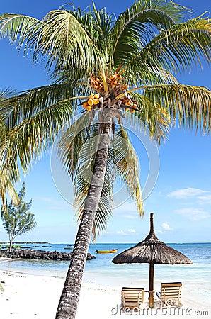 Seychelles Paradise lost