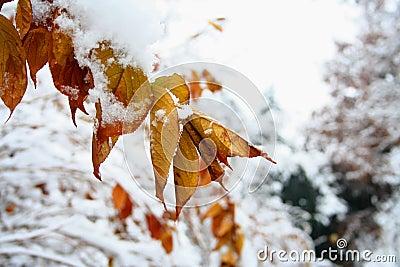Sezon zima