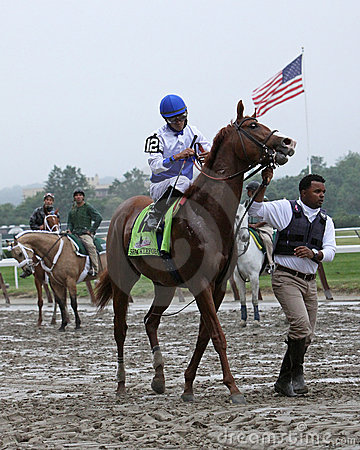 Shackleford Enters the Gate for The Belmont Stakes Editorial Stock Image