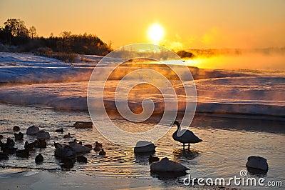 Shadow of bird in winter