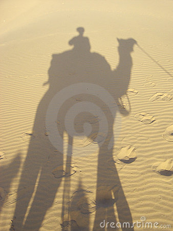 Shadow and camel