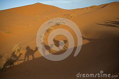 Shadow caravan in the Sahara