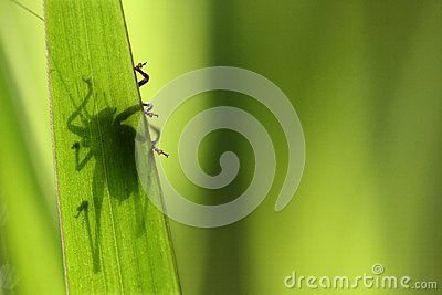 Shadow of an insect