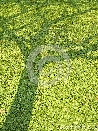 Free Shadow Of Big Tree Royalty Free Stock Photo - 31065315