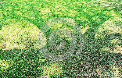 The Shadow of tree on a green lawn.