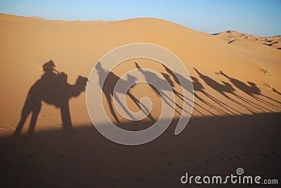 Shadows of camel riders