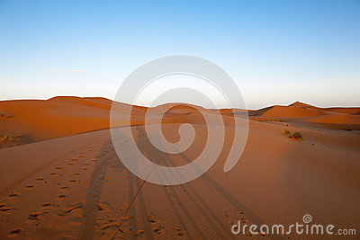 Shadows on the dunes of the Sahara