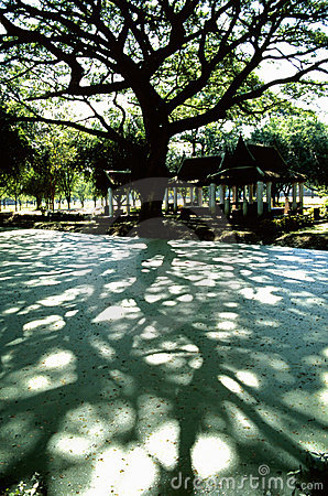 Free Shadows Of A Tree Royalty Free Stock Photography - 5640107