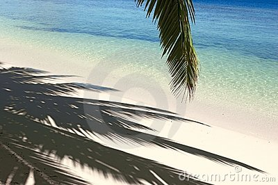 Shadows of the palm tree
