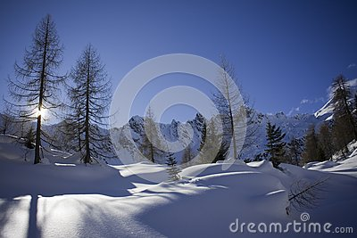 Shadows on the snow