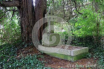 Shady grave stone