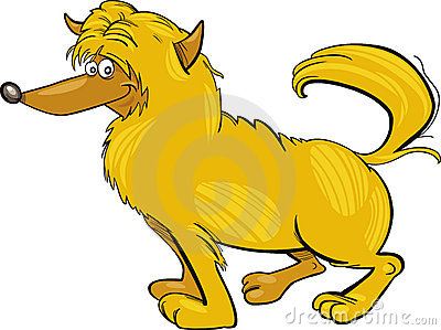 Shaggy yellow dog