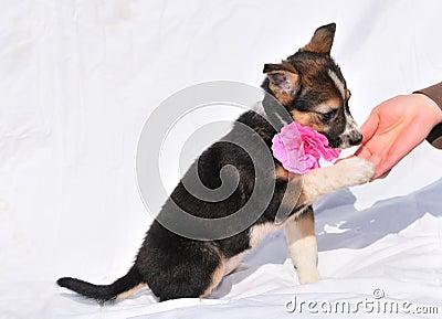 Shaking puppy s hand