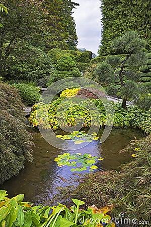 Shallow charming pond.