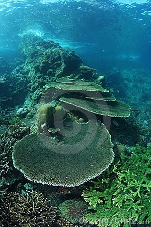 Shallow coral sea