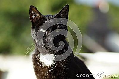 Shallow Focus Photography Of Black Cat Free Public Domain Cc0 Image