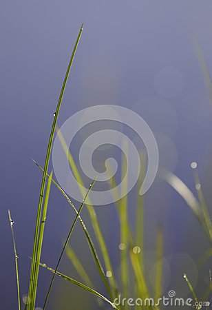 Shallow grass plant