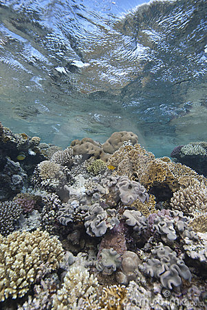 Shallow tropical coral reef